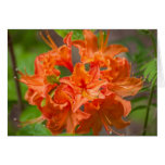 Orange Flowers Azalea Floral Photography