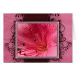 Pink tropical hibiscus flower